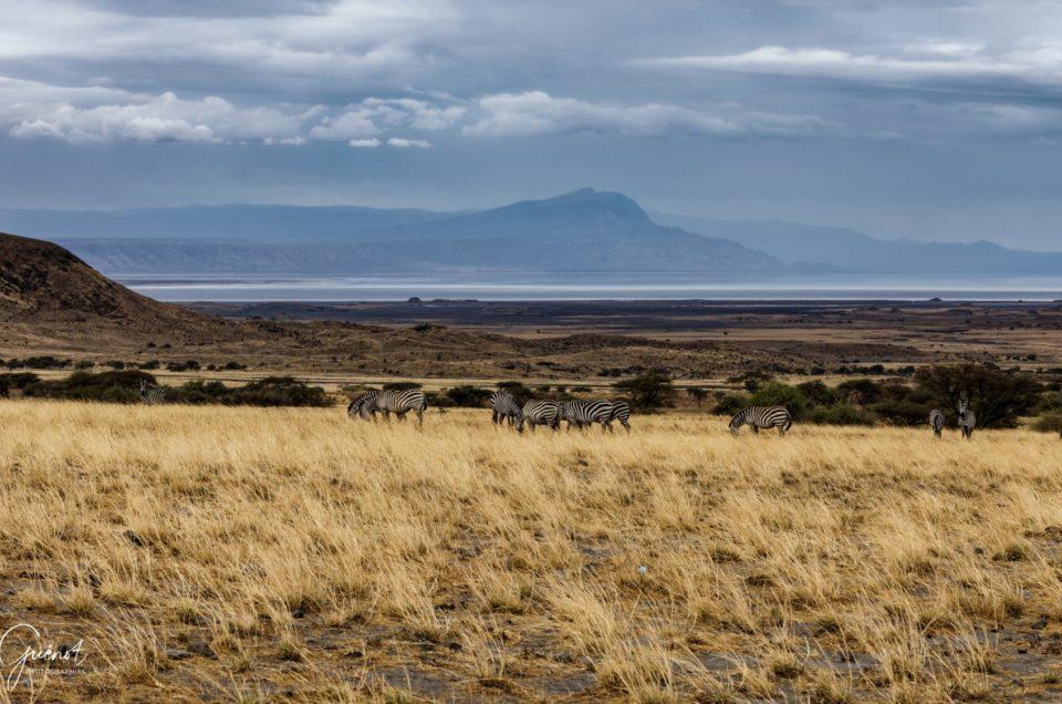 Safari en Tanzanie 2018