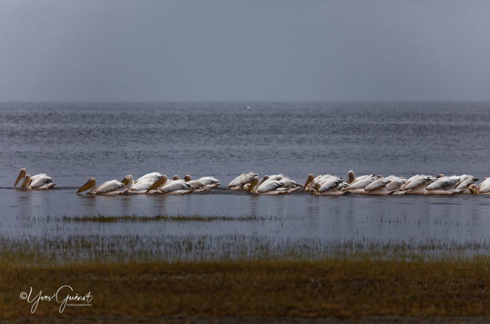 Quelques oiseaux de notre safari en Tanzanie