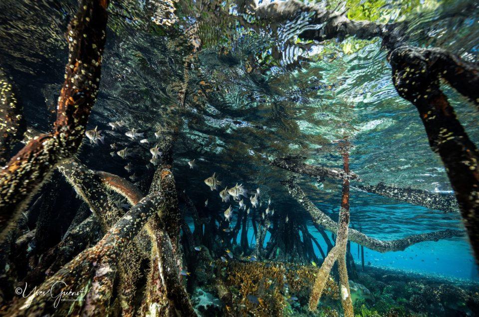 Accompagnez moi dans la mangrove