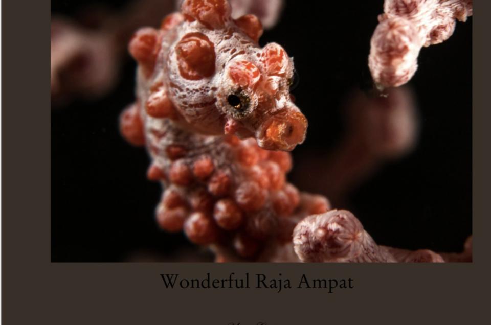 Mes créations à propos de la plongée au Raja Ampat