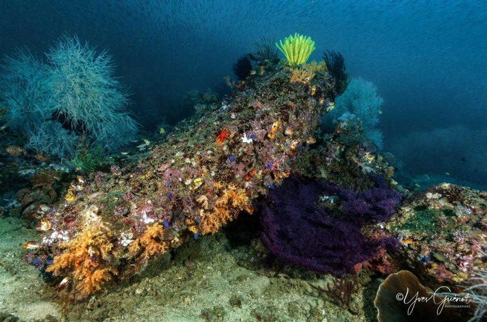 Les Jardins sous-marins de Triton Bay