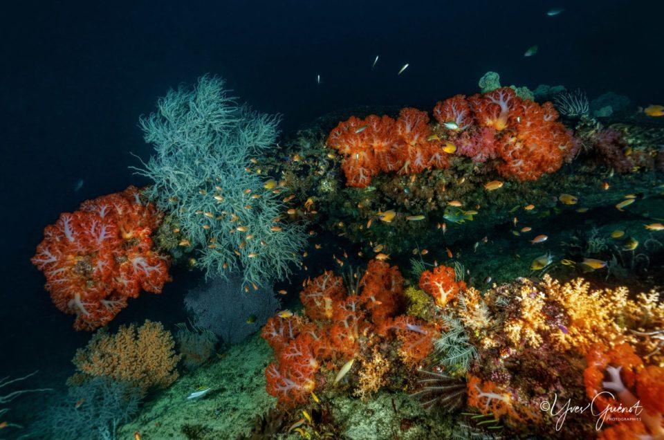 Croisière en mer de Banda avec Wallacea