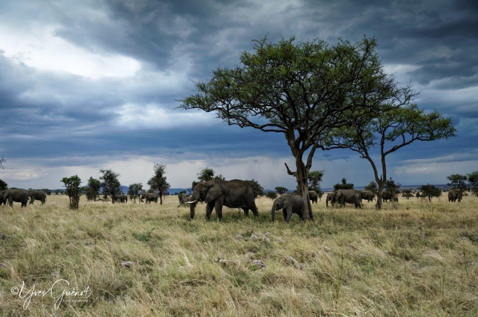 """Les """"GROS"""" animaux des parcs de Tanzanie"""