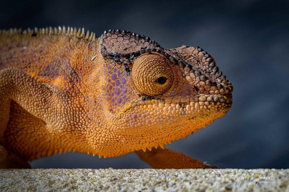 Les Reptiles de notre Case